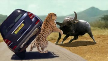 The Most Classic Encounters In Wild Animals – Wild animals fight 2020